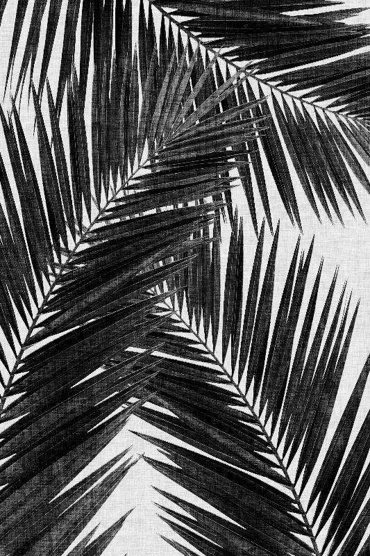 Palm Leaf Black White III