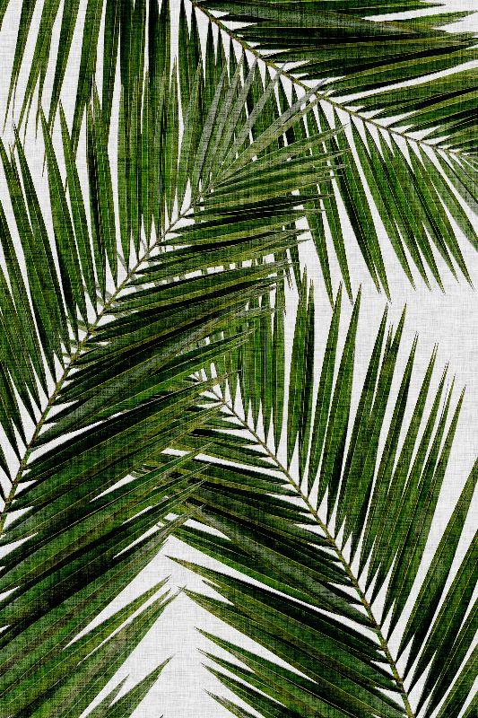 Palm Leaf III