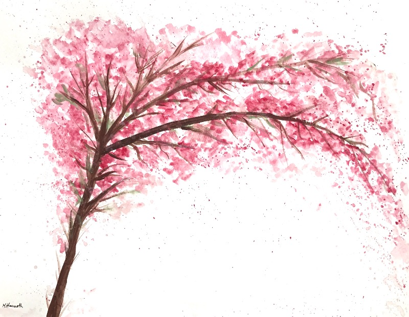Cherry blossoms tree