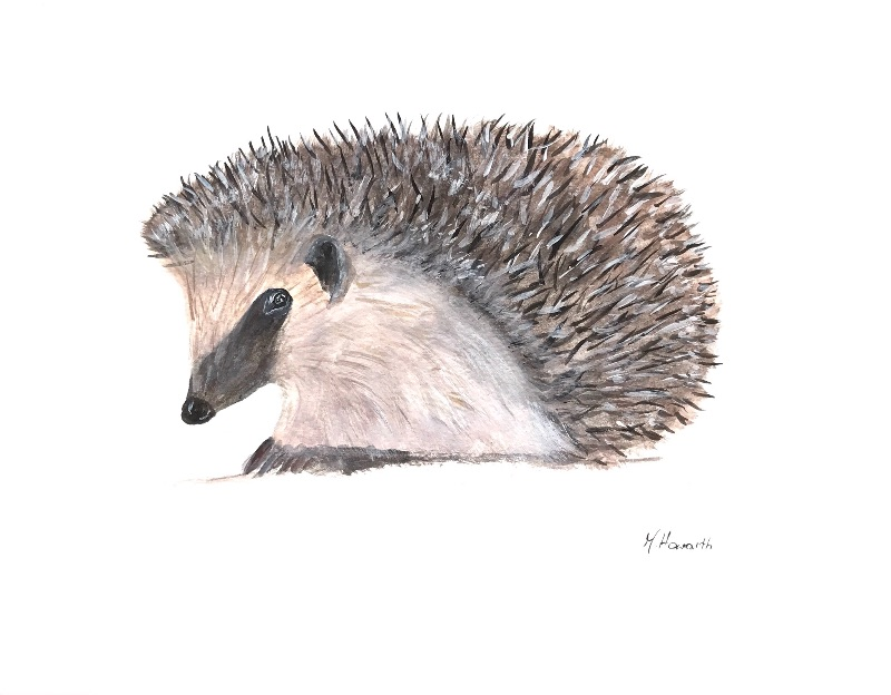Hedgehog animal
