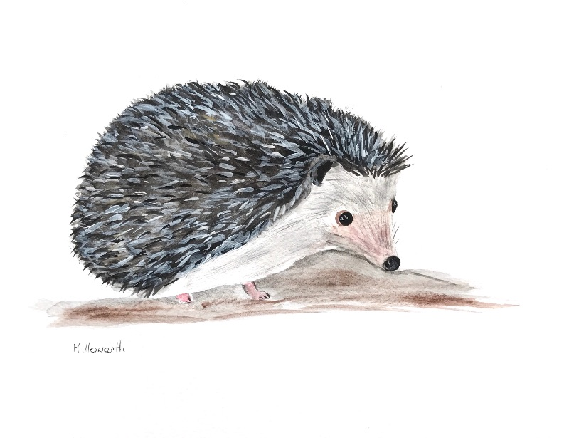 Hedgehog animal Art