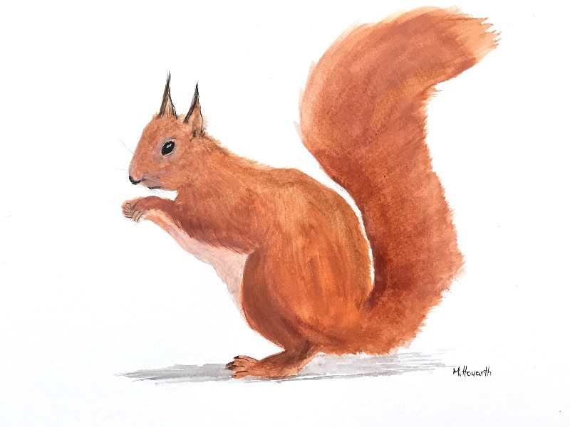Squirrel animal art