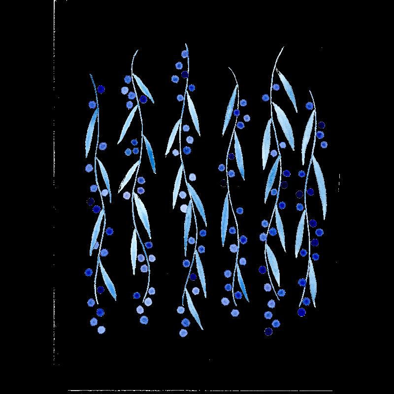 Blue mimosa