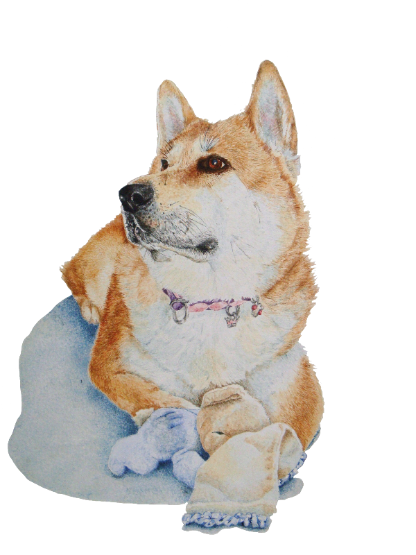 Akita and teddy portraite