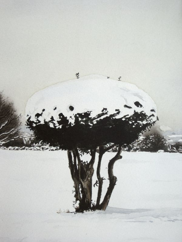 Bush In Snow landscape