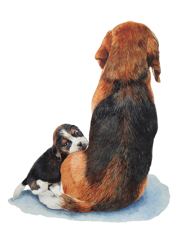 Cute puppy beagle and mum
