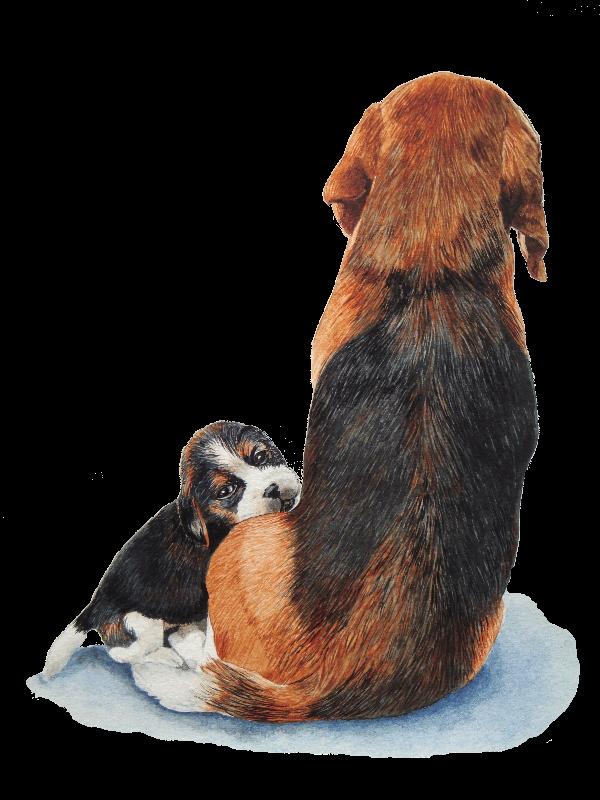 Cute puppy beagle and mum