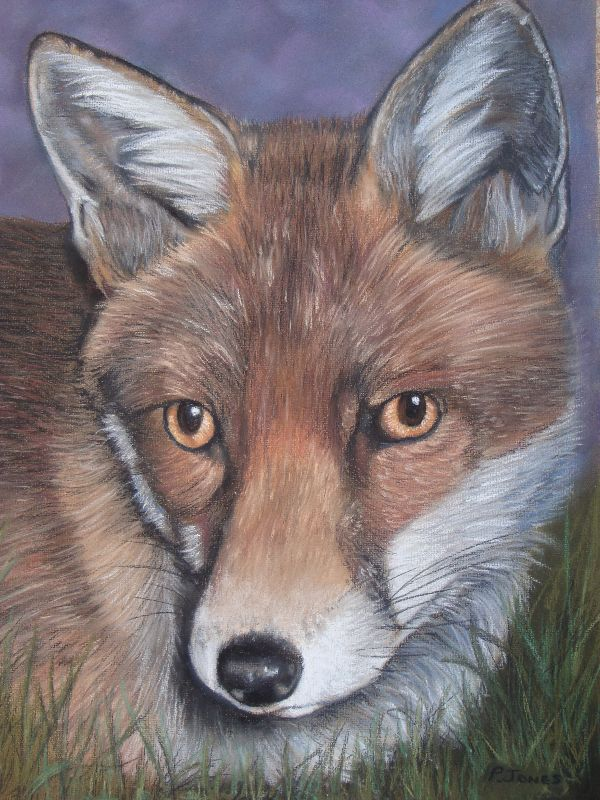 Mr Fox  wildlife art
