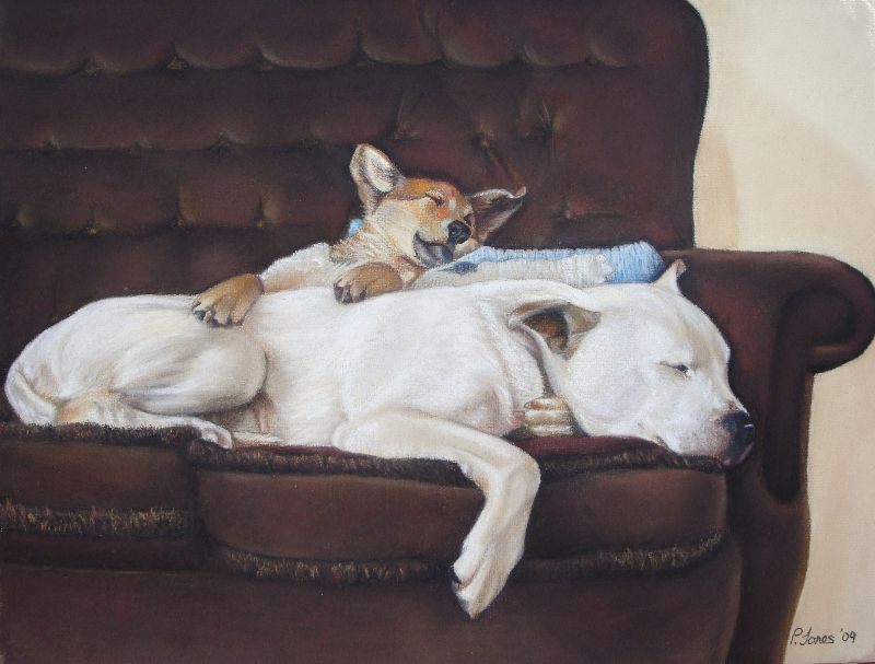 cute sleeping dogs