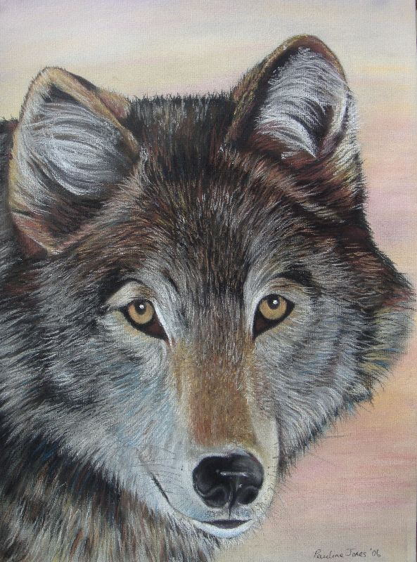 grey wolf portrait art