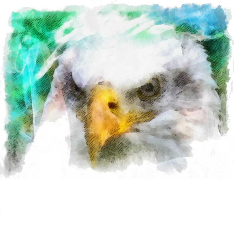 Abstract Bald Eagle