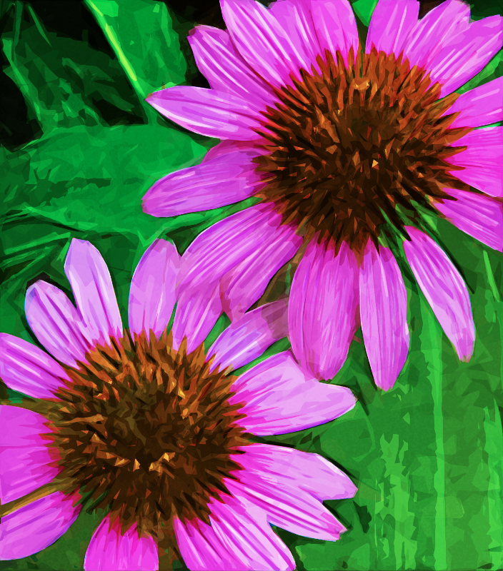 Purple Echinacea on Green