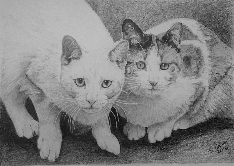 Caydon  Taylor Cats