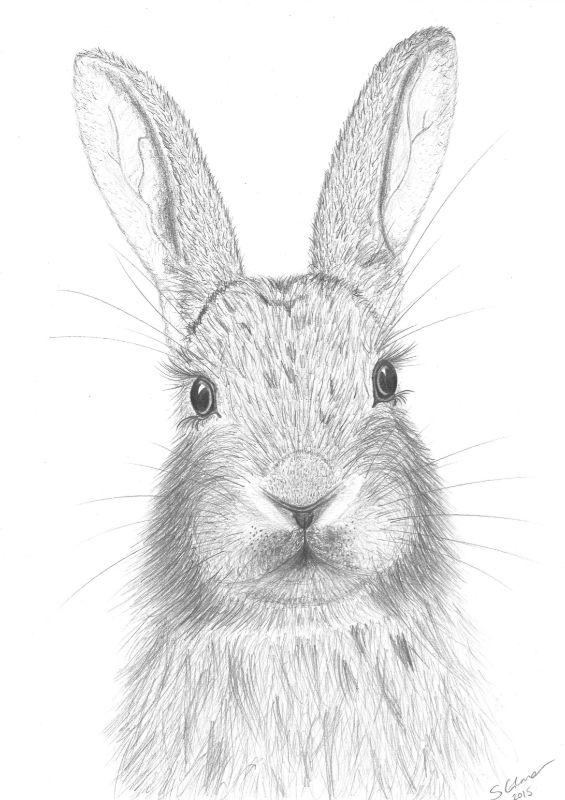 Daisy the Rabbit