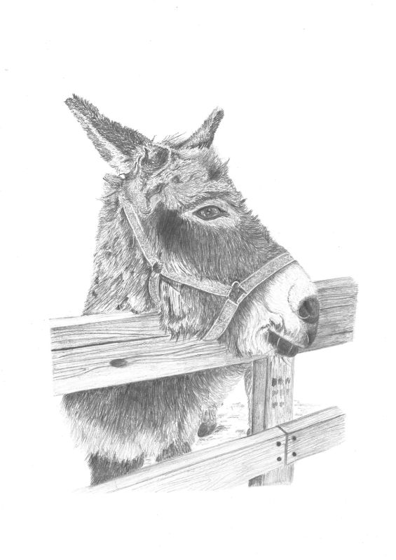 Hoti the Donkey