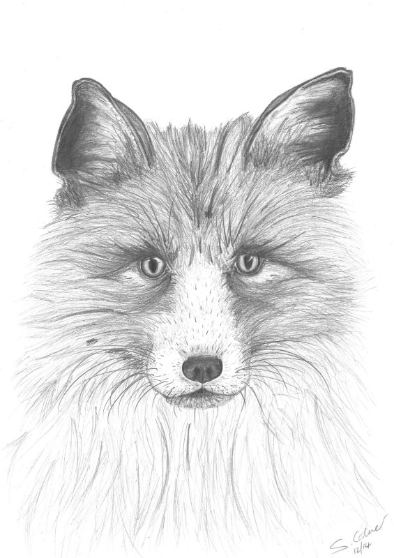 Ivy the Red Fox