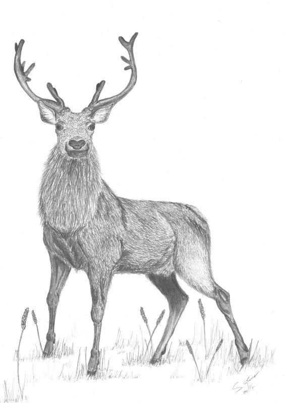 Seoras the Stag