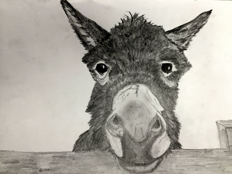 Donkey waiting