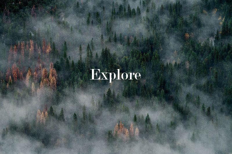 Explore Forest