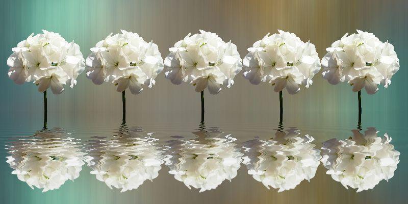 Five Geraniums