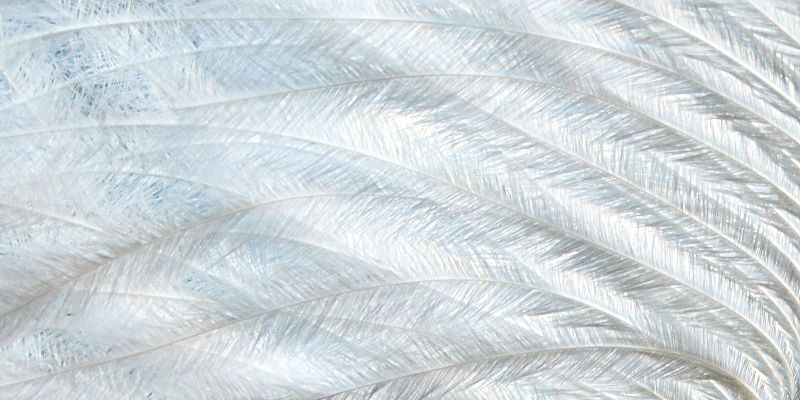 Pure feather