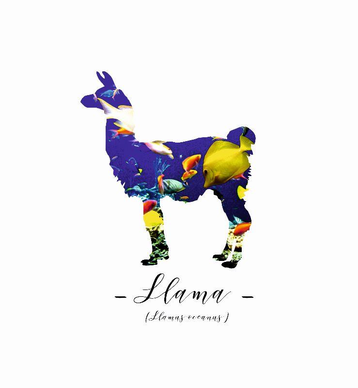Llama Oceanus