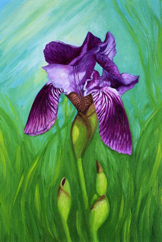 Purple Iris Summer Flower