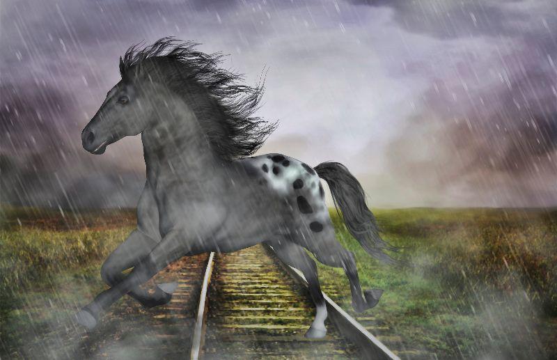 Horse in the rain
