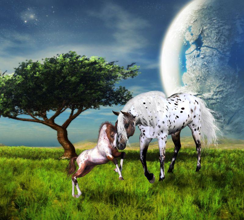 Horses Love Forever
