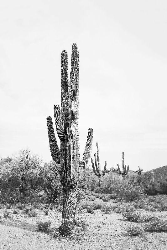 Desert Cactus in BW