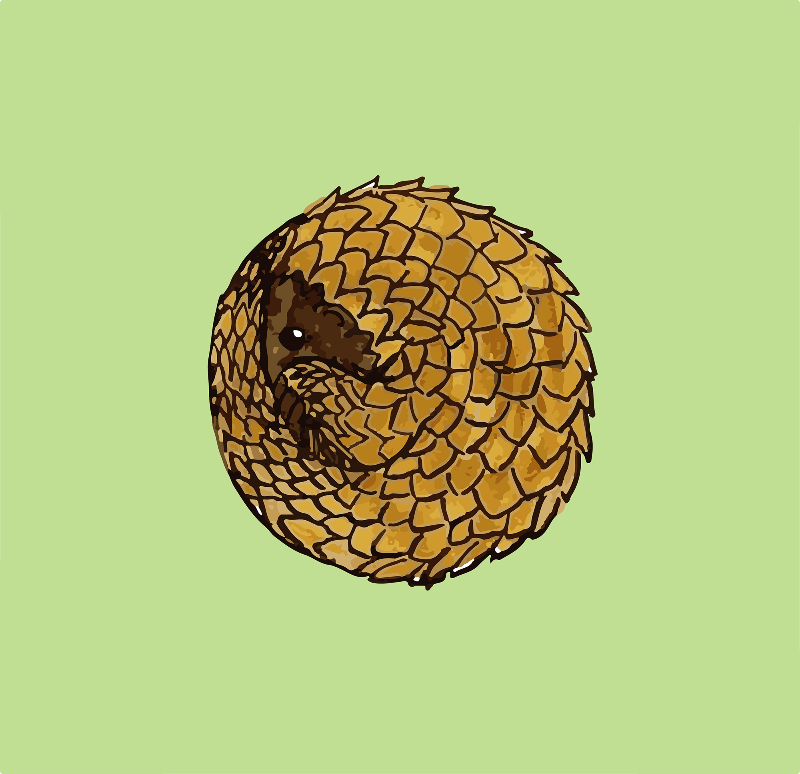 Cosy Little Pangolin