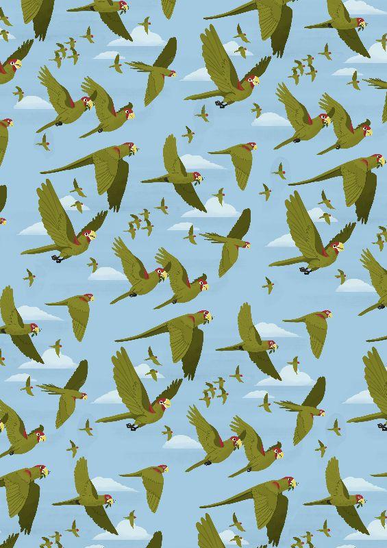 Parakeet Migration