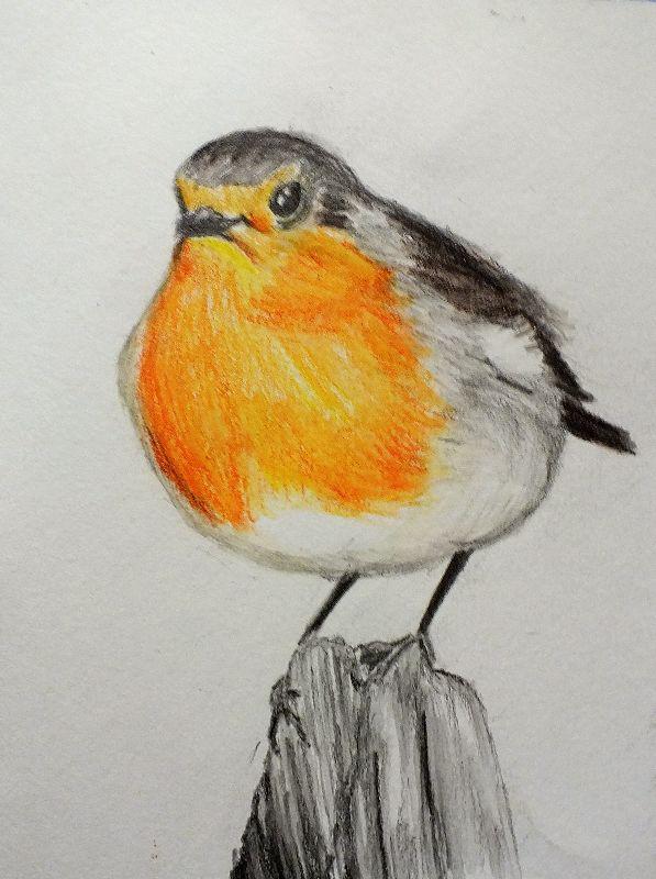 Robin on Fencepost