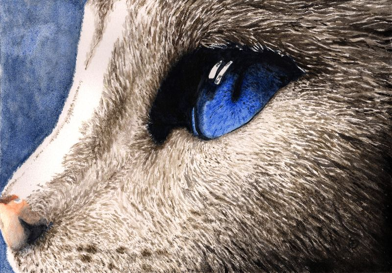 Cat eye watercolour