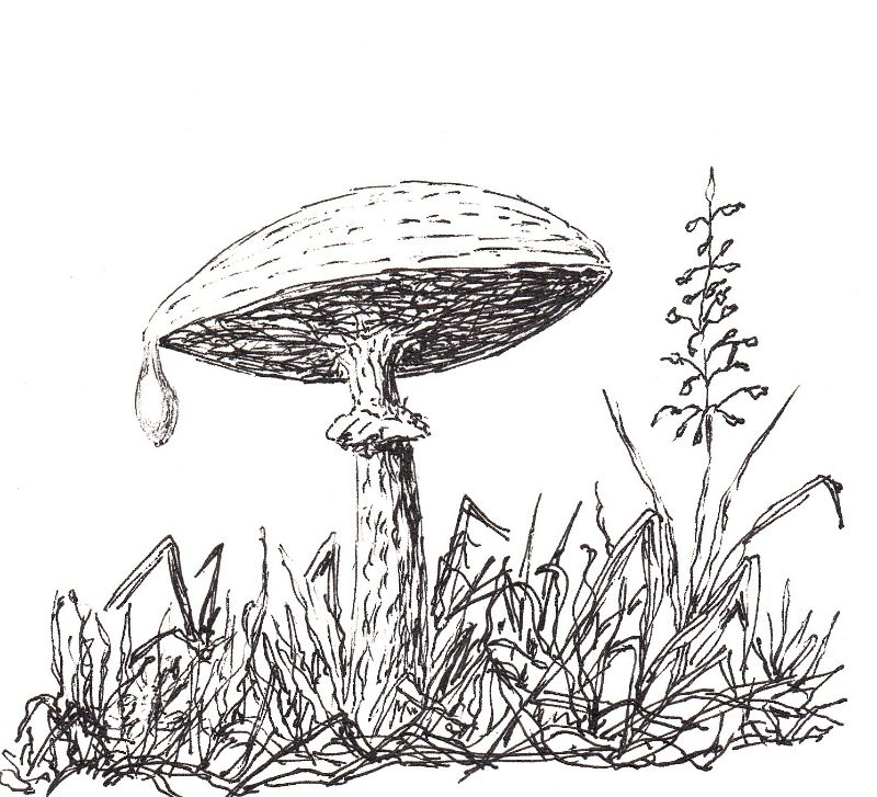The Crying Mushroom