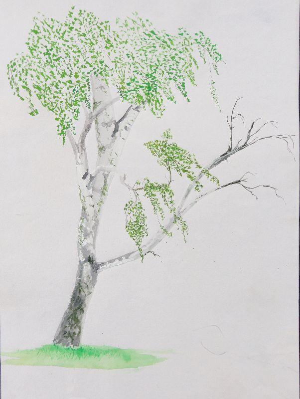 Tree  Brandon Hill
