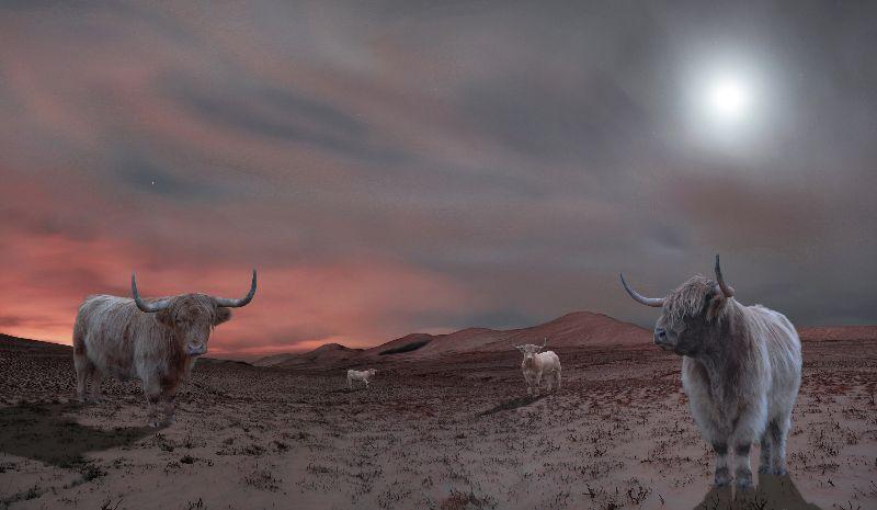 Cows on Mars