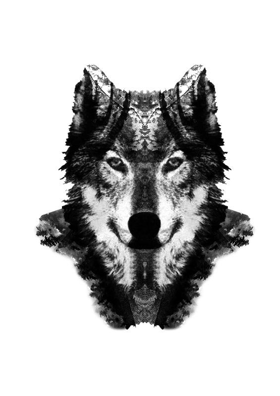 Black Forrest Wolf