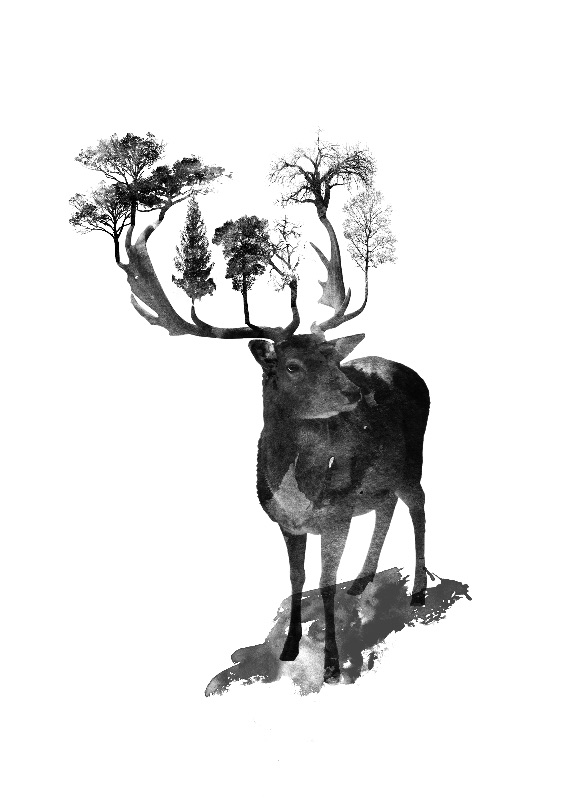 The Black Forrest Deer