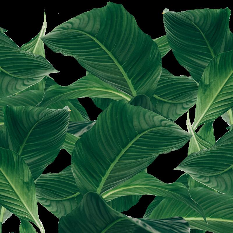 palm waves