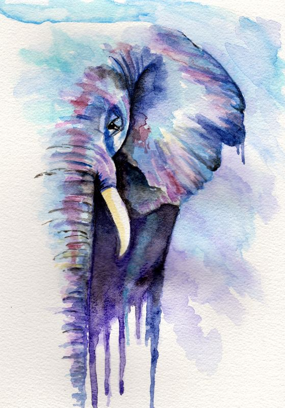 Elephant Watercolour