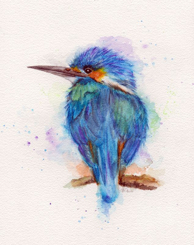 The Kingfisher