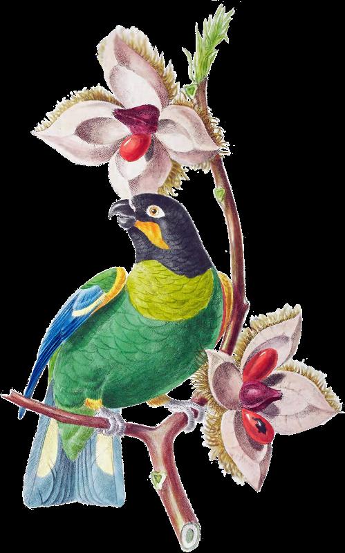 Brazil Bird