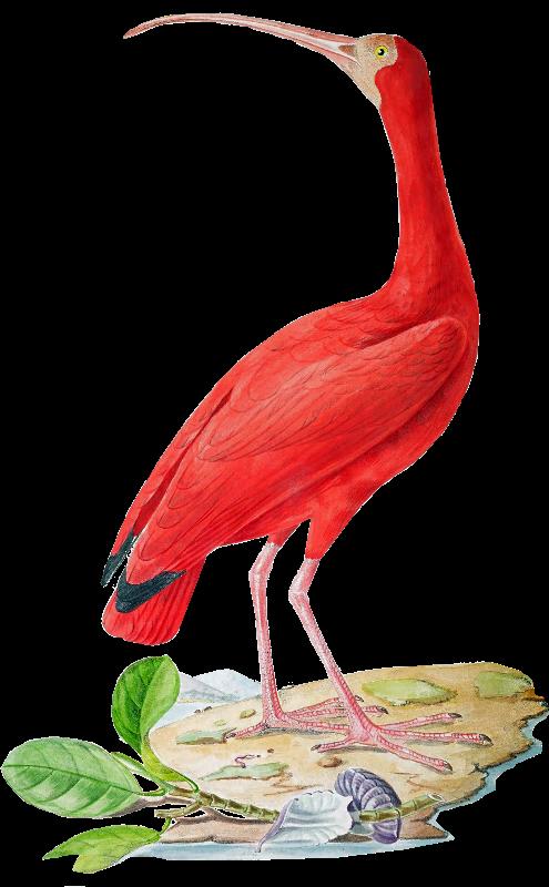 Brazil Bird 5  Red Heron