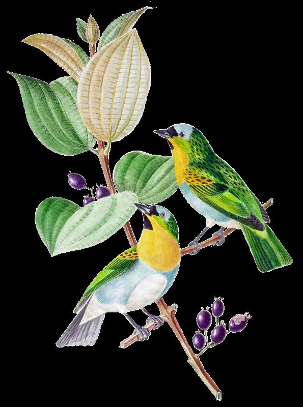 BrazilBird2