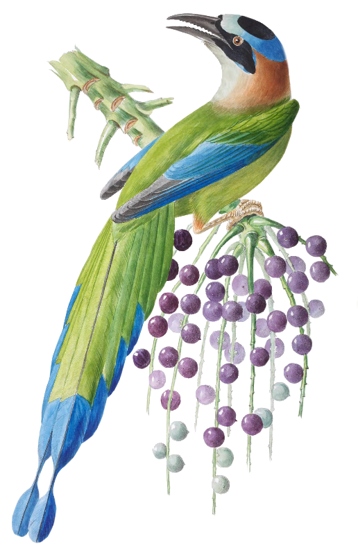 BrazilBird6