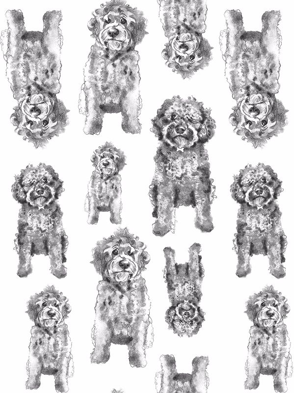 Oodles of Labradoodles
