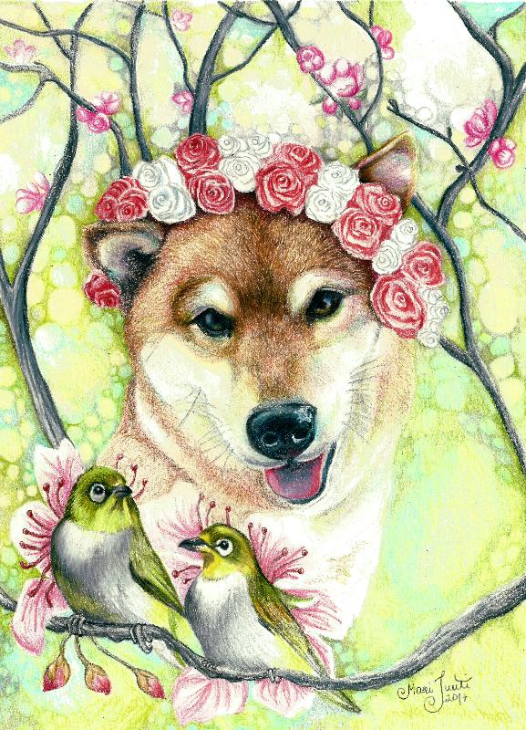 Cherry Blossom Shiba