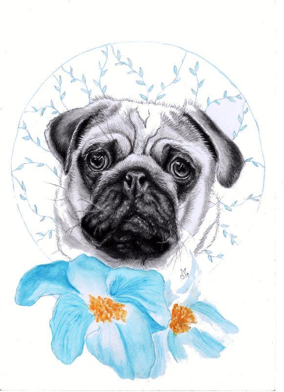 Poppy Pug