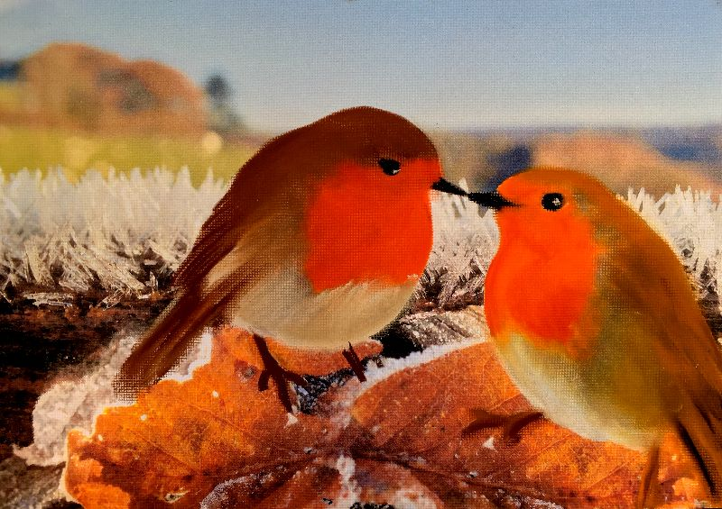 The love of a robin